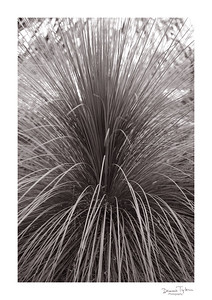 BotanicalGardens2018_O9A4218grass