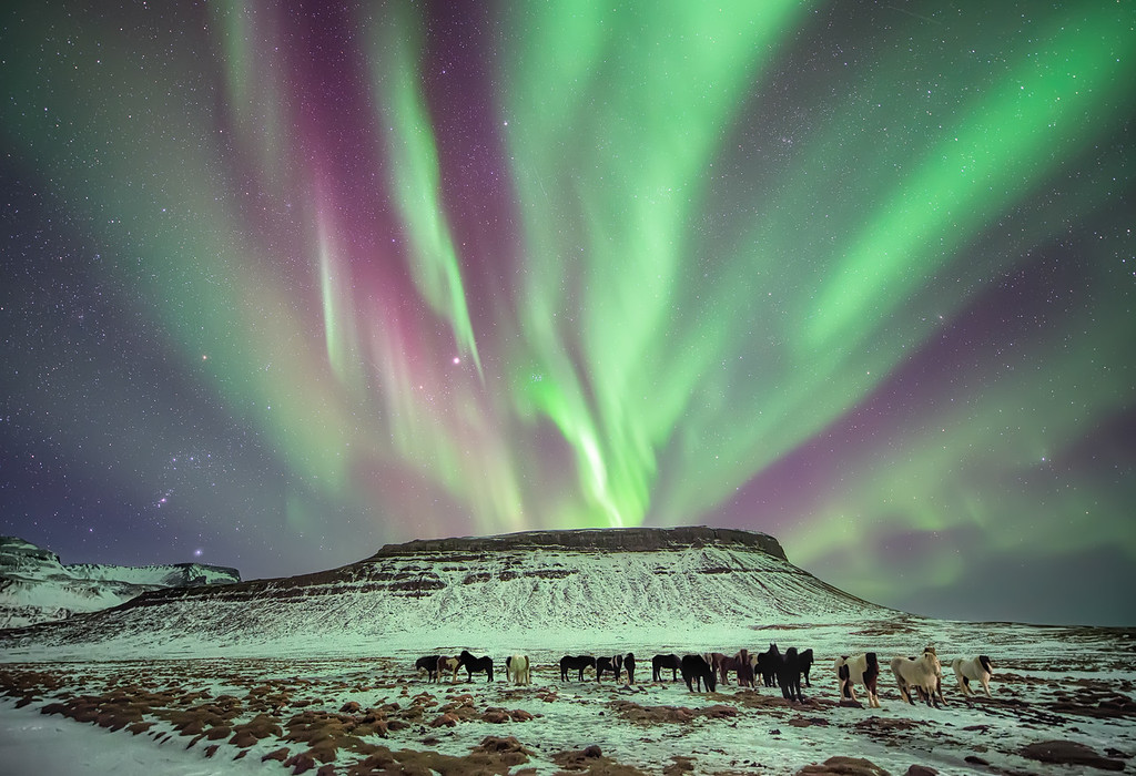 Photograph: Under The Green of The Night, The Horses Did Roam - Horses grazing in a field beneath a wonderful display of the aurora borealis in Iceland.