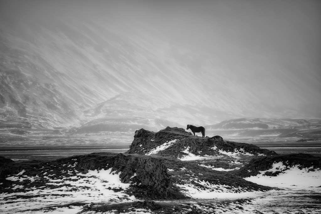 Photograph: King of the Hill - An Icelandic horse stands atop a rocky outcrop.