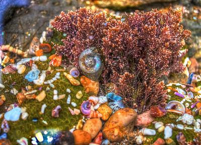 Jan 2: Under the Sea (Tidepool Point Lobos)
