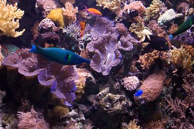 Monterey Bay Aquarium Fish