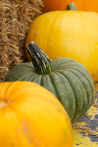 pumpkin show close ups