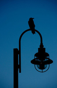 RavenLamppost