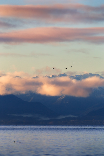 A flock of Canadian geese fly in front of the Olympic Mountain Range on November 25th, 2016.