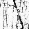 Thorn-bush