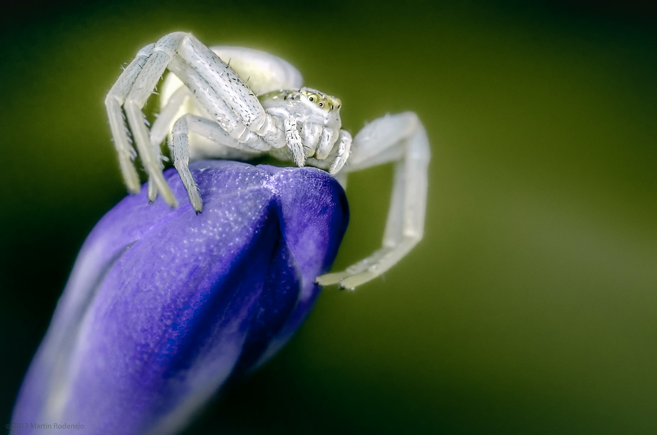 Crabspider
