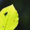 The fly on the leaf