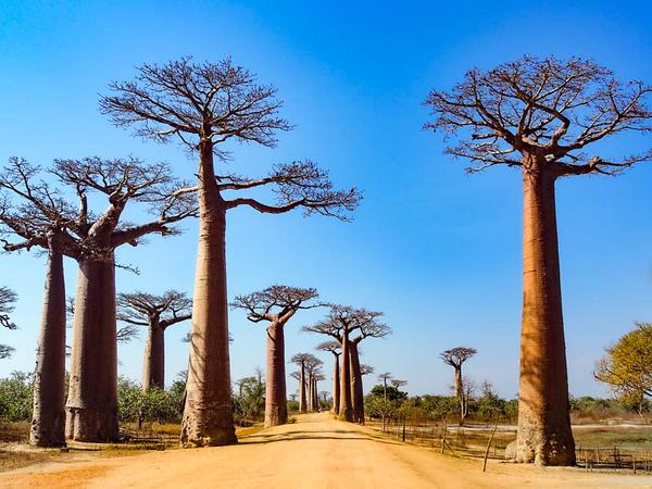 Madagascar RED