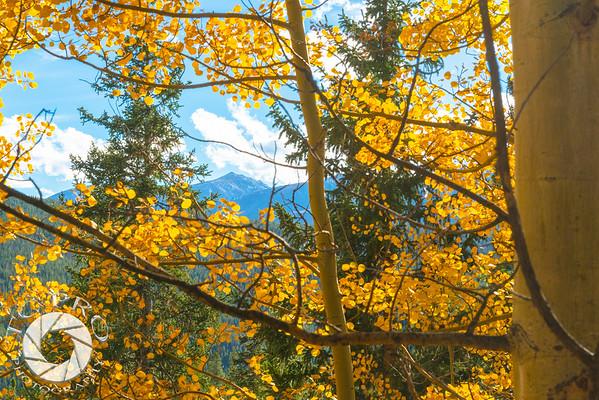 Mosquito Range Peak seen through colorful Aspen