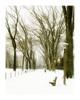 Winter Elms