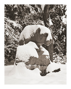 Lion in Winter (Browntone)