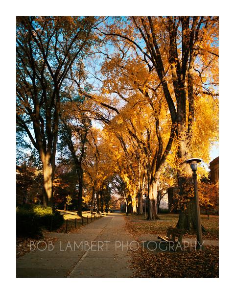 October Elms