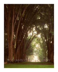 Elm Trees, Penn State