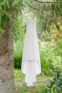 A wedding dress is hung from a tree branch in Prince Edward County