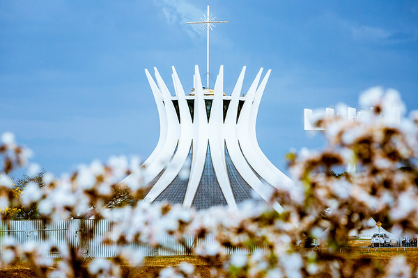 Brasília (DF), 23/08/2016 Ipê Branco Local: Esplanada Foto: Felipe Menezes/Metrópoles