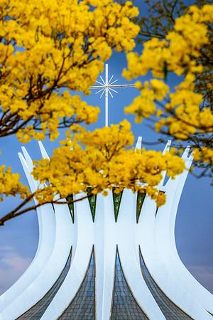 Brasília (DF), 23/08/2016 Ipê Amarelo Local: Esplanada Foto: Felipe Menezes/Metrópoles