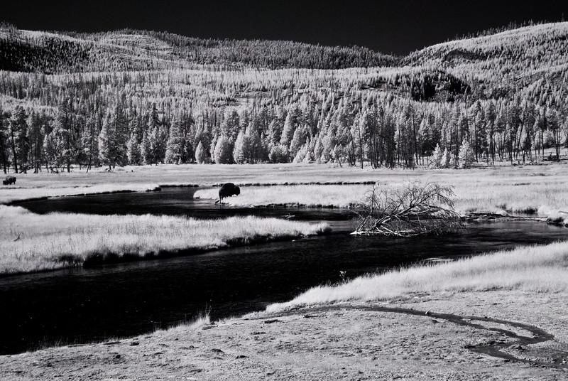 Yellowstone WY