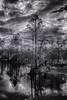 Everglades Swamp