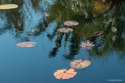 Naples Botanical Gardens 3-22-17
