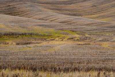 Best of Palouse-low res-4580