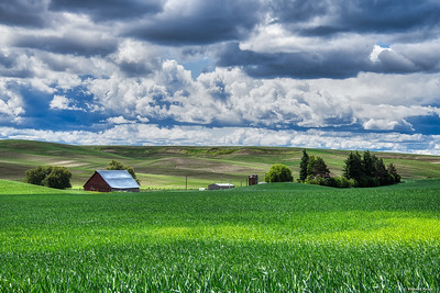 Palouse farm 2--3