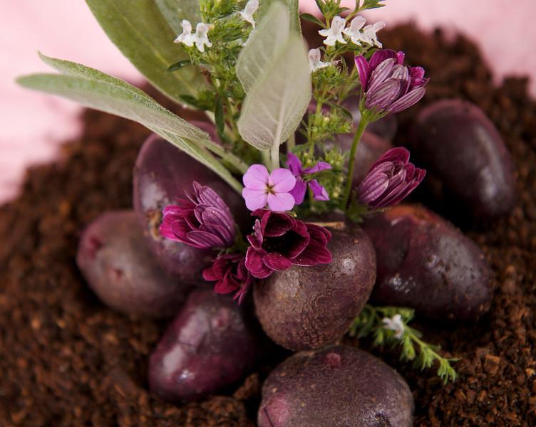 Purple Potatoes in Soil