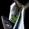 Mackerel Portrait