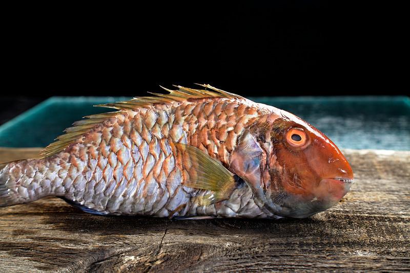 Parrot  Swim