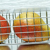 Pear Trap