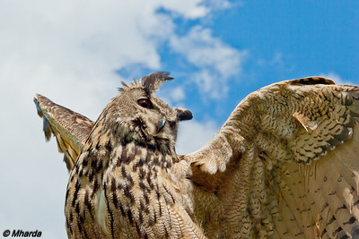 Owl, reaching for the sky