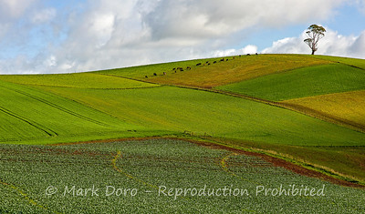 Farm land, near Devonport, Tasmania