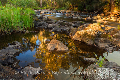 Golden light, Howqua River, Victoria