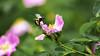 Bessemer Park Natural Garden-024-Spring052816-DSC_6867  copy