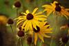 Prospect Park Nature Garden-028-Summer090216-DSE_0649  copy