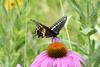 Palmisano Park Natural Area-008-Spring071016-DSC_0371  copy