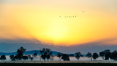 Grafton Sunrise Panorama with Birds