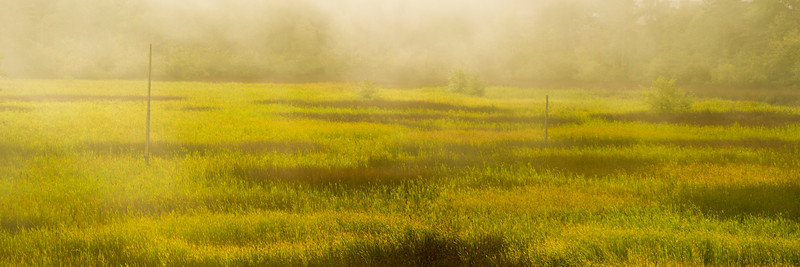 Morning sun shines through fog on wetlands adjacent to the ferry terminal