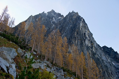 Dragontail and larch trees await the first rays of sun on a fall morning