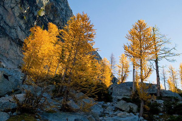 Larch Trees- Top of Aasgard Pass<br /> Was 10 degrees this morning.