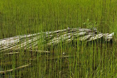Reeds. Salmon Le Sac