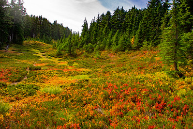 Meadow in fall colors