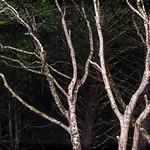 Shoreline Woods