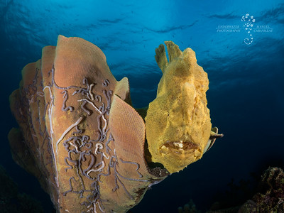 FROGFISH FRIDAY