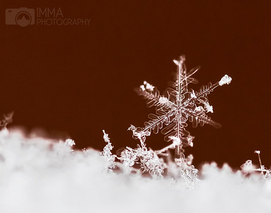 """This is my first attempt at capturing a snowflake. And I wanted to shoot it 'in the wild"""", that is no staged, just as it had fallen.  I wanted that level of simplicity. and, although it is not perfect, it's still beautiful. There's beauty in imperfections as long as we know nothing can be totally perfect and that is ok."""