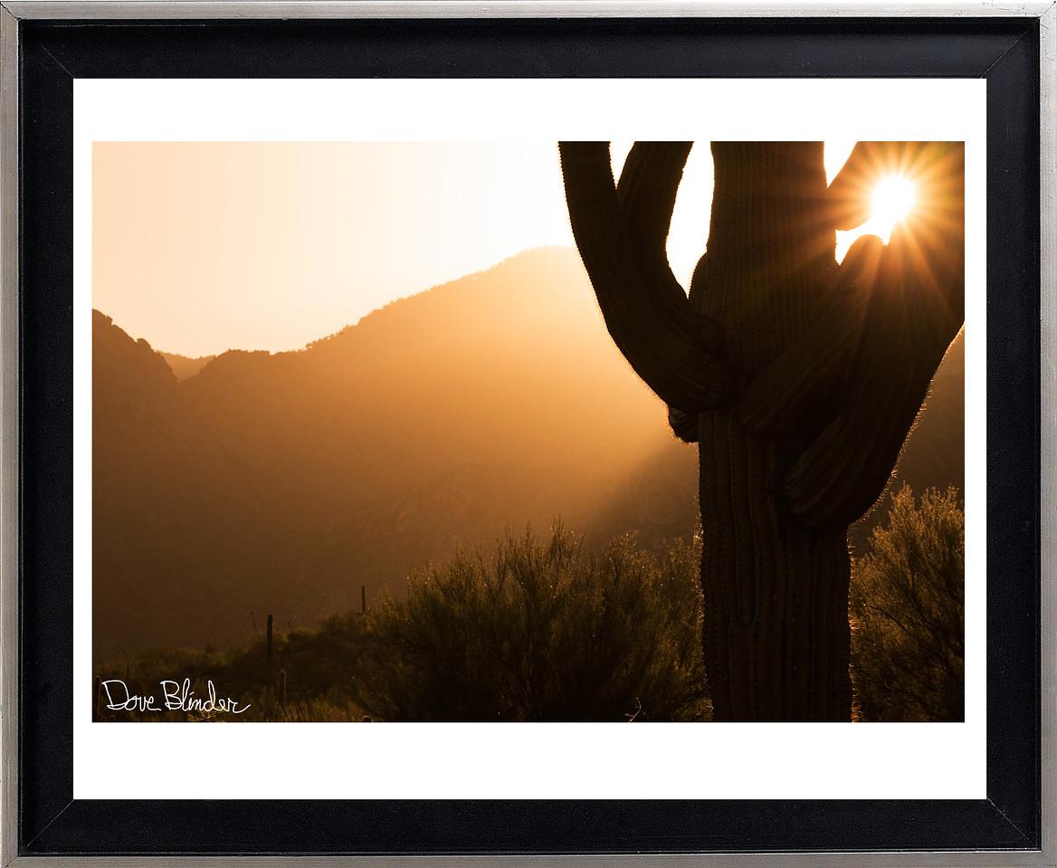 Sunrise through Saguaro