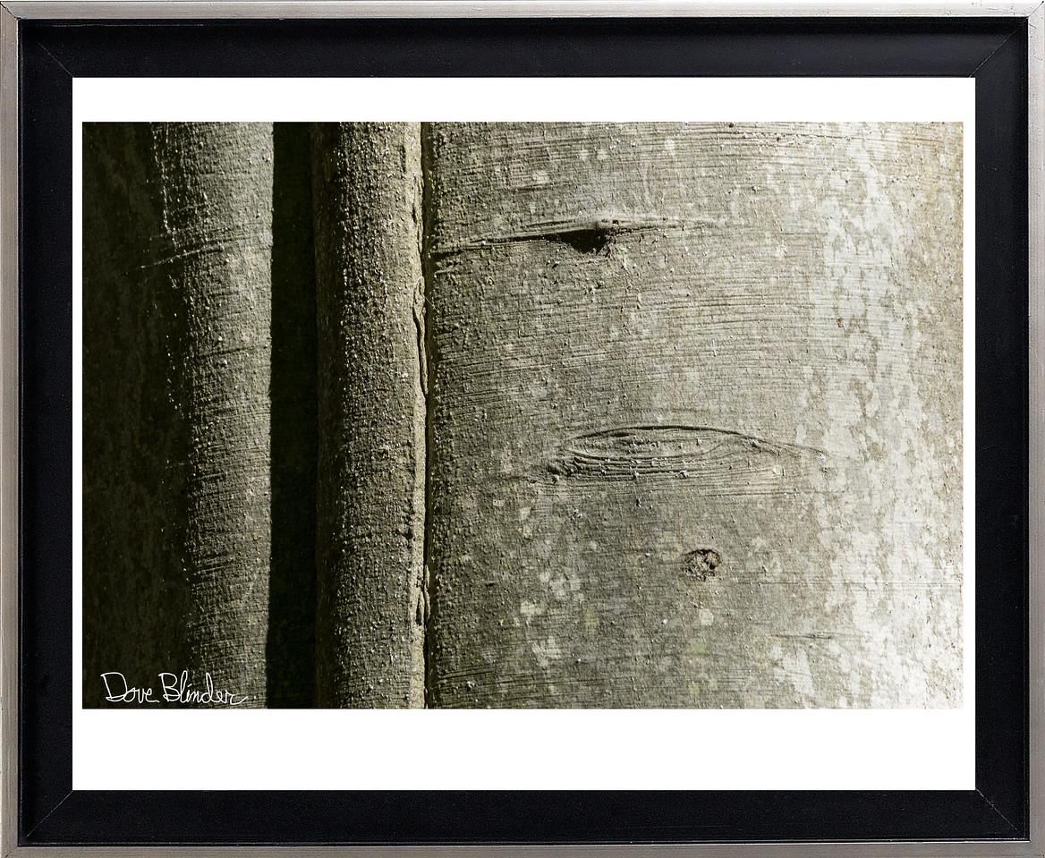 Beech Tree Detail
