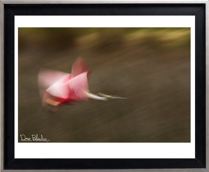 Roseate Spoonbill Abstract