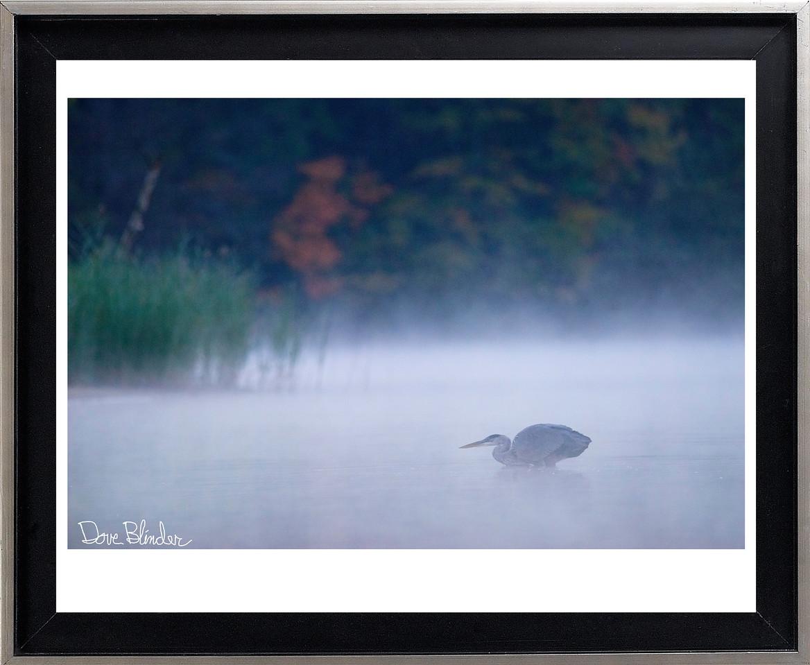 Great Blue Heron in Fog