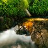 Madera Canyon waterfall surrounded by Adiantum capillus-veneris (southern maidenhair fern), Santa Rita Mountains, Arizona