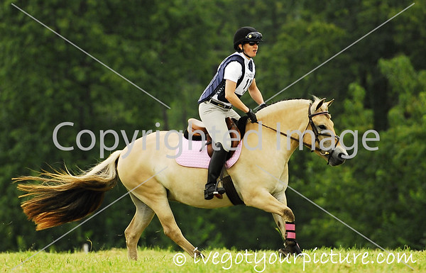 Theme:  Colorful Horses<br /> Champagne Run MT<br /> August 2013
